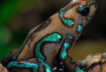 Frogs! / by The Magic Zoo