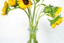 Sunflower / by Elysa Casey