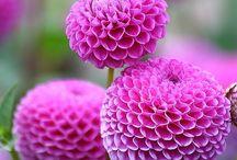 Flowers / by Julie Simpson