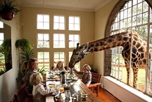 @Amazing Animals / by KD Mackey