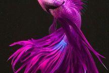 BETA FISH / by Helen Eproson