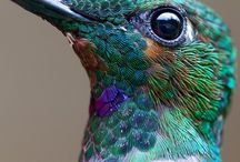 Hummingbirds / by Shelly Penko