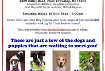 NEW Flint Event!! / by Last Day Dog Rescue