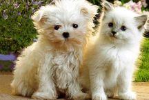 Pets / by Nicole Bohuslavsky