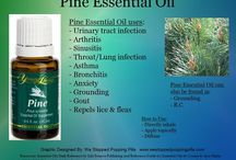 Pine / Benefits of Pine essential oil / by Lavender Lobby