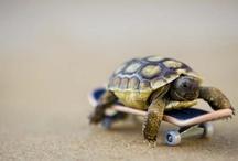 turtle B) / by sarah mathews