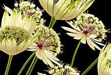 planten voor de tuin / by Els van den Bos
