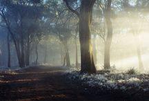 Fog ...♡♥ ... / by Kimberly Hamner