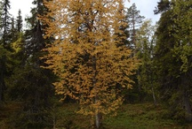 Lapland Finland / by Reeta Nyman