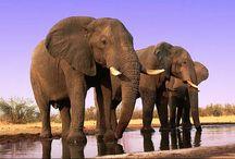 Earth's Wildlife / Wildlife photos / by EcoWatch