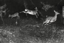 Trail Cam - Photos / by Deer & Deer Hunting