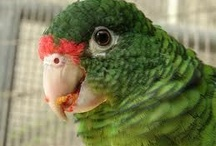 Bird Food / Choosing a healthy diet for your bird is important for not only its health but for its disposition.  After all, do you feel well when you eat junk food? Parrots have unique digestive systems so good bird food is important.  / by BirdSupplies.com