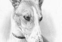 dog art / by Cate Macgowan