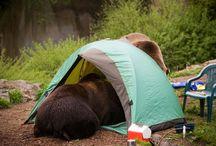 Safe Kamping / Camper, hiker and backpacker awareness / by St. Mary - Glacier Park KOA