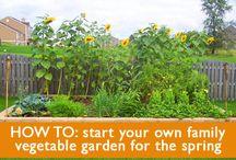 gardening, back yard awesomeness / by Kelly Stewart