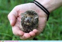 cuteness / by Shanna Irvine
