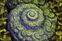Fibonacci / by Lynne Bush