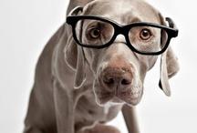 Dog @ Weimaraner / I love you @ Dog / by Dor@