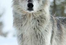 Wolves / by BrandingNest