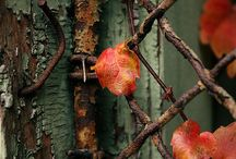 Rusted, Crusted, Antiqued, Repurposed OR Aged to Perfection / Remember the good ol days when things were made with pride and care, but more importantly with hands, not machines?  Those days are gone, but we can find fragments if we look around. / by Judine Pottmeyer
