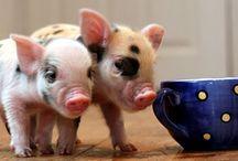 Piggies / by Nicole Schlossman Foley