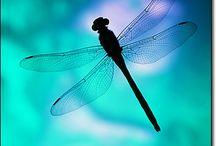 Wings / by Janis Lynn