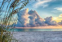 Beautiful Naples Florida / by Tiffany Muehlbauer