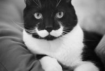 Mustache / by Kristen Toney