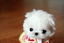 PUPPIES!! / by Lindsay Reichert