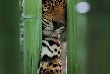 Animal Kingdom / by Jess