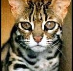 Everything Bengals / by Deb Miles