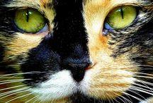 Cat Attack / by Marilyn Sholin Fine Art