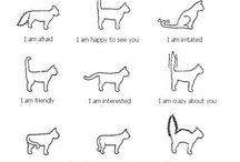 love my cats / by Stephanie Holmes