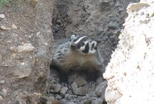 Big Bend Creatures / by Friends of Big Bend National Park