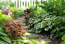 Garden / by Maria Vdp