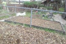 Winter 2013 garden beds / by Cathy Kantowski