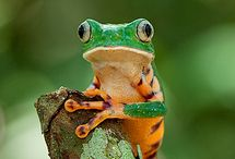 Frogs / by Beth Owens