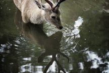 Runderen/wildedieren / by marja van olderen