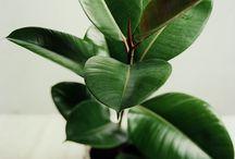 Indoor Plants / by Sheila Cook