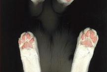Crazy Cat Lady / by Lygia Pires
