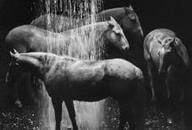 Photographs / by Helen DeRamus