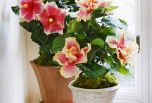 Gardening, Flowers etc  / by Nicolina Montigny