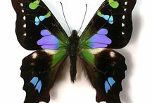 Butterflies & Pure Beauty / by Wendy Stevens