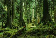 Rainforest / by Min Ette
