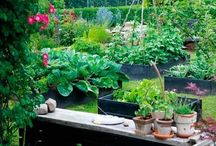 Kitchen Garden / Design of kitchen garden around the world. / by นายโชคดี ม.กรุงเทพ