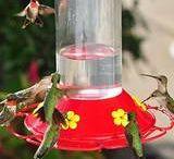 Gardening ideas & Bird  food / by Gerda Pait