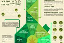 Informative Marijuana/Cannabis Info / Infographics, articles, and other items of informative or newsworthy interest. / by Marijuana Checks