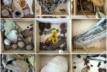 Nature projects / by Sarah Eleanor