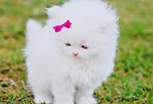 Cute Creatures / by Kristie McKendrick
