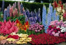 Gardens, Arrangements, Features / by Shelly Seales